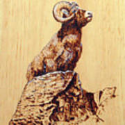 Rocky Mountain Bighorn Sheep Art Print