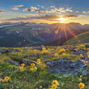 Rocky Mountain National Park Summer Sunflowers Pano 1 Art Print