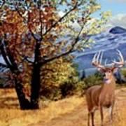 Rocky Mountain Trail Art Print