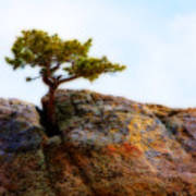 Rocky Mountain Tree Art Print