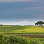 Rolling Tuscany 2 Print by Patrick English