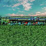 Romaine Lettuce Harvest Art Print