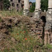 Roman Poppy Art Print