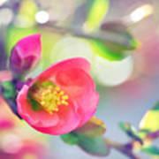Romancing Spring I Art Print