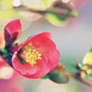 Romancing Spring II Art Print