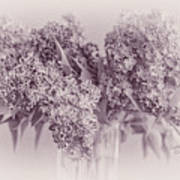 Romancing The Lilac Art Print
