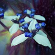 Romantic Island Lilies In Blues Art Print