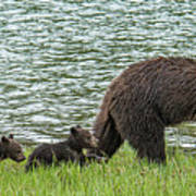 Romping By The Lake With Mama Bear Art Print