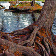 Roots On The River Art Print
