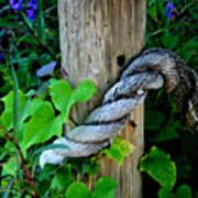 Rope And Vine Art Print
