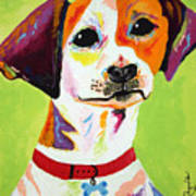 Roscoe The Jack Russell Terrier Art Print