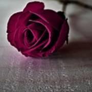 Rose #003 Art Print