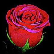 Rose 18-9 Art Print