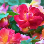 Rose 354 Art Print