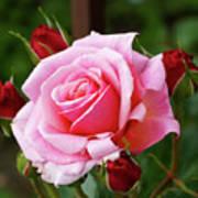 Rose Attendants Art Print