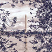 Rose Blossom Monument Art Print