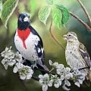 Rose Breasted Grosbeaks Art Print