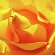 Rose Bright Orange Sunny Rose Flower Floral Baslee Troutman Art Print
