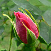 Rose Bud Art Print