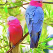 Rose cockatoos Art Print
