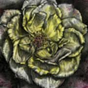 Rose Cream Art Print