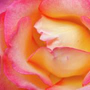 Rose Detail 2 Art Print