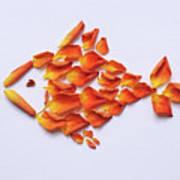 Rose Fish Art Print