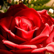 Rose For My Valentine Art Print