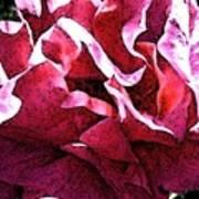 Rose Fresco Art Print