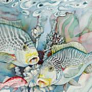 Rose Island IIi Art Print