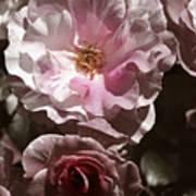 Rose Kiss Art Print