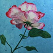 Rose On Blue Art Print