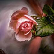 Rose On Paint #g5 Art Print
