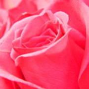 Rose Petals - 1 Art Print