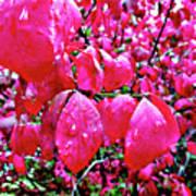 Rose Red 2 Art Print