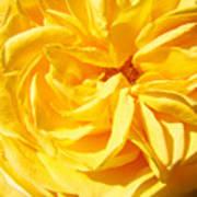 Rose Spiral Flower Garden Baslee Troutman Art Print