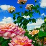 Rose To The Sky Art Print