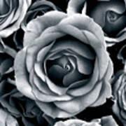 Rose Tones Art Print