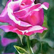 Rose Violet Bud Art Print