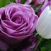 Rose With Tulip Art Print