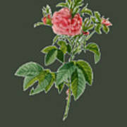 Rose101 Art Print