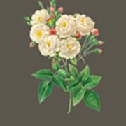 Rose126 Art Print