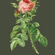 Rose144 Art Print