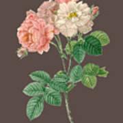 Rose155 Art Print