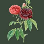 Rose64 Art Print