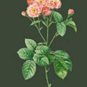 Rose76 Art Print