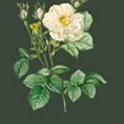 Rose81 Art Print