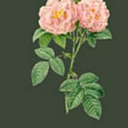 Rose82 Art Print