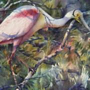 Roseate Spoonbill Art Print