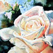 Roses 6 Art Print